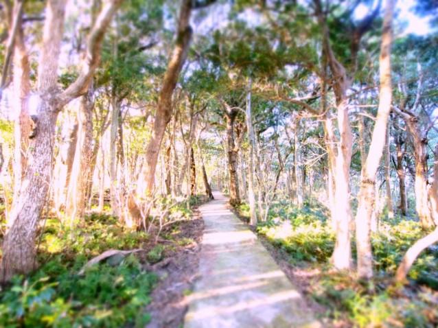南紀串本 リゾート大島 遊歩道
